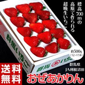 いちご イチゴ 苺 群馬県産 JA利根沼田 おぜあかりん (12~15粒) 約500g 送料無料 ※冷蔵