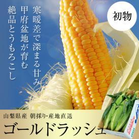 初物『ゴールドラッシュ』 山梨産 2Lサイズ 2.5kg以上(6本入り)※冷蔵