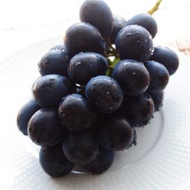 長野産 ハウス栽培品『ナガノパープル』1房 約400g ※冷蔵