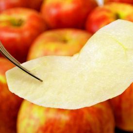 【糖度12.5度選別】青森県産 岩木山りんご生産出荷組合 葉取らずサンつがる 訳あり品 約3kg(目安として7~15玉) ※冷蔵 送料無料