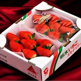 いちご 栃木県産 「スカイベリー」 1箱 約600g <約300g(5~15粒)×2パック> ※冷蔵