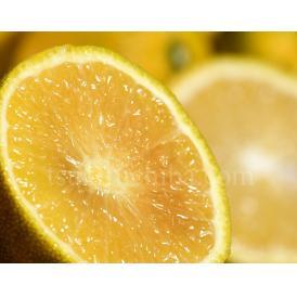 """""""邪を払う""""が由来の幻の柑橘、果汁を飲んで体をリフレッシュ!"""