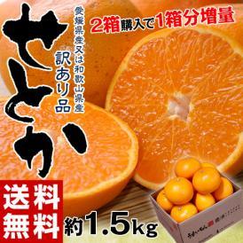 【2箱購入で1箱分増量】 せとか 訳あり品 約1.5kg 送料無料 和歌山または愛媛県産 柑橘 みかん
