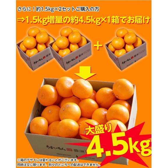 【2箱購入で1箱分増量】 せとか 訳あり品 約1.5kg 送料無料 和歌山または愛媛県産 柑橘 みかん02