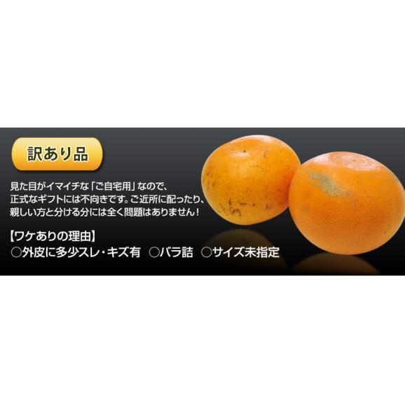 【2箱購入で1箱分増量】 せとか 訳あり品 約1.5kg 送料無料 和歌山または愛媛県産 柑橘 みかん03