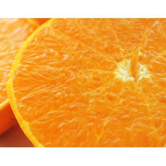 【2箱購入で1箱分増量】 せとか 訳あり品 約1.5kg 送料無料 和歌山または愛媛県産 柑橘 みかん06