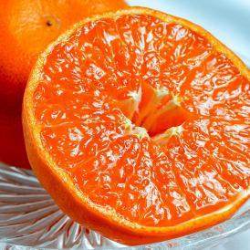 JAからつの高級柑橘が訳あり大特価!