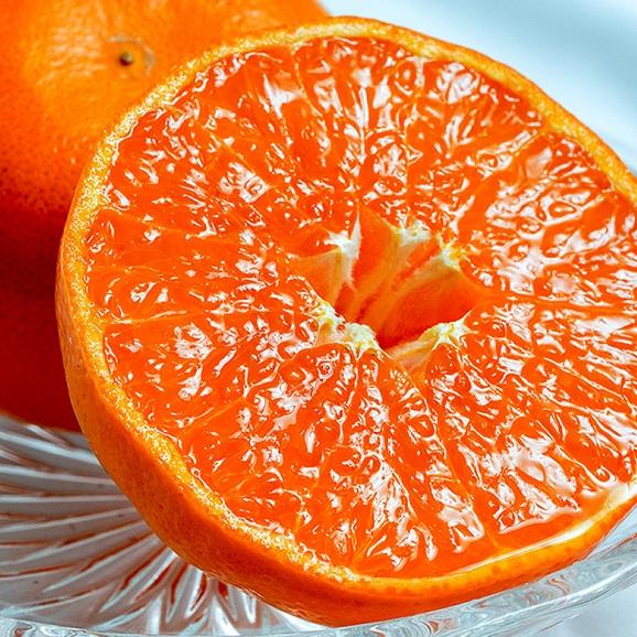 JAからつ『訳あり はまさき』佐賀県産 柑橘 キズ・スレあり・サイズ不揃い 約2.5kg 簡易包装 ※常温 送料無料01