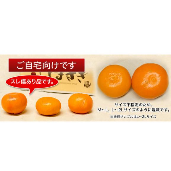 JAからつ『訳あり はまさき』佐賀県産 柑橘 キズ・スレあり・サイズ不揃い 約2.5kg 簡易包装 ※常温 送料無料02