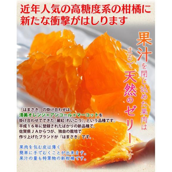 JAからつ『訳あり はまさき』佐賀県産 柑橘 キズ・スレあり・サイズ不揃い 約2.5kg 簡易包装 ※常温 送料無料03