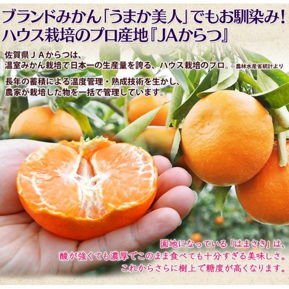 JAからつ『訳あり はまさき』佐賀県産 柑橘 キズ・スレあり・サイズ不揃い 約2.5kg 簡易包装 ※常温 送料無料04