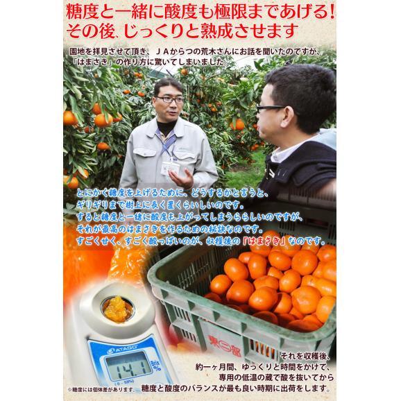 JAからつ『訳あり はまさき』佐賀県産 柑橘 キズ・スレあり・サイズ不揃い 約2.5kg 簡易包装 ※常温 送料無料05