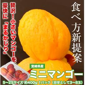 送料無料 マンゴー 宮崎県産 ミニマンゴー S~2Sサイズ 約400g 1パック(目安として3~8玉) 常温