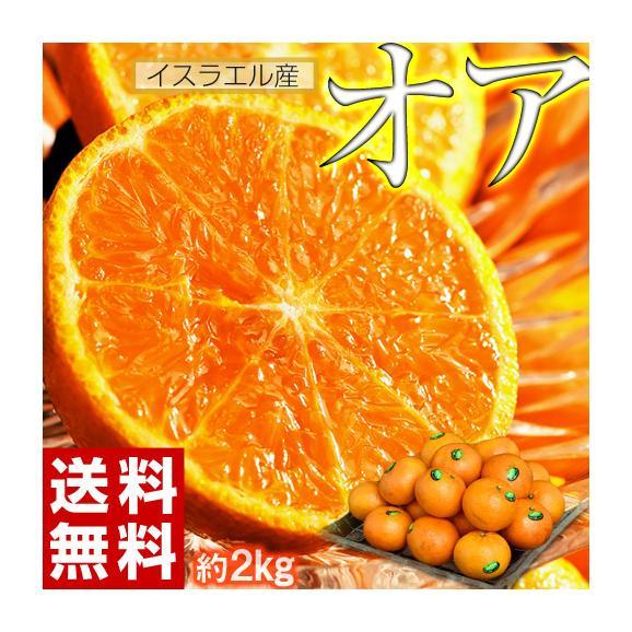 神秘の柑橘 「オア」 甘くて手で皮を剥ける 約2kg 1箱:14~20玉 みかん オレンジ フルーツ 期間限定 高糖度 イスラエル産 送料無料01