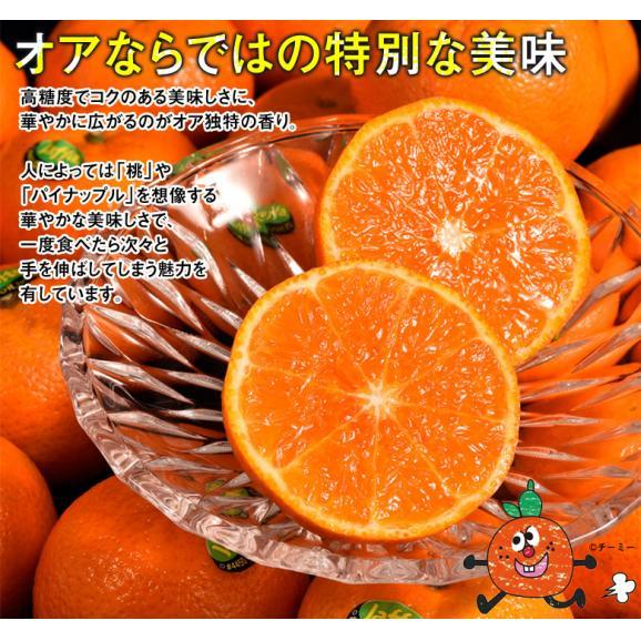 神秘の柑橘 「オア」 甘くて手で皮を剥ける 約2kg 1箱:14~20玉 みかん オレンジ フルーツ 期間限定 高糖度 イスラエル産 送料無料02