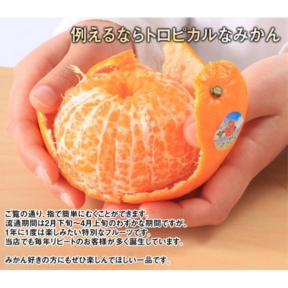 神秘の柑橘 「オア」 甘くて手で皮を剥ける 約2kg 1箱:14~20玉 みかん オレンジ フルーツ 期間限定 高糖度 イスラエル産 送料無料03