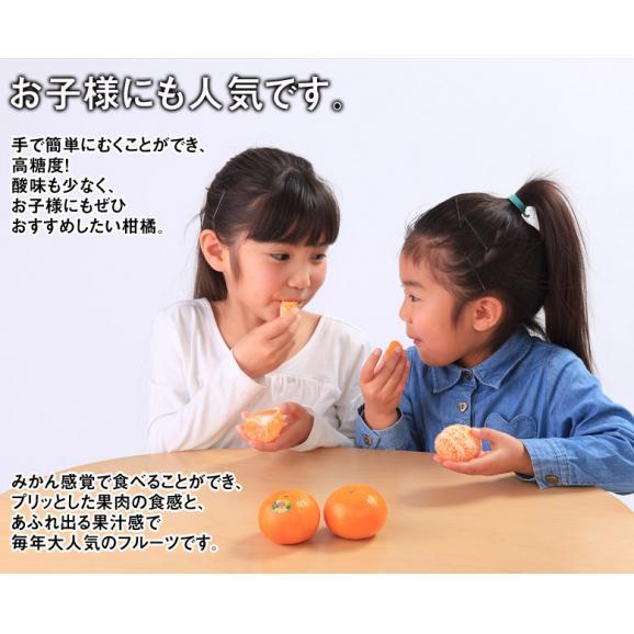 神秘の柑橘 「オア」 甘くて手で皮を剥ける 約2kg 1箱:14~20玉 みかん オレンジ フルーツ 期間限定 高糖度 イスラエル産 送料無料04