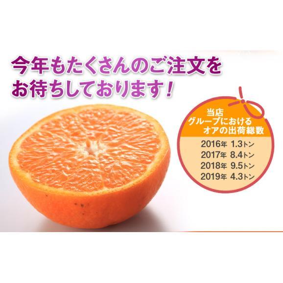 神秘の柑橘 「オア」 甘くて手で皮を剥ける 約2kg 1箱:14~20玉 みかん オレンジ フルーツ 期間限定 高糖度 イスラエル産 送料無料05