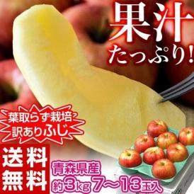 りんご サンふじ 青森県産 訳あり葉とらず ふじ 約3kg (目安として7~13玉) 岩木山りんご生産出荷組合 送料無料
