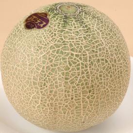 今年も熊本県産の大玉メロンをお楽しみください!