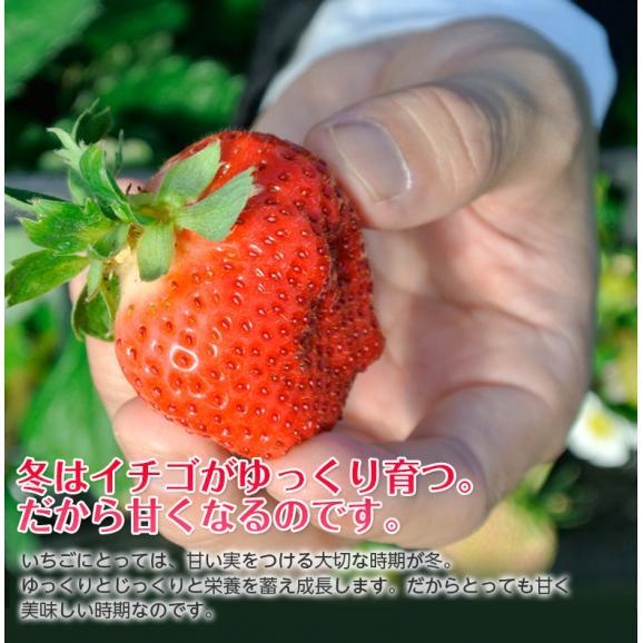 福岡県産 あまおういちご G(グランデ) 約270g×2パック ※冷蔵05