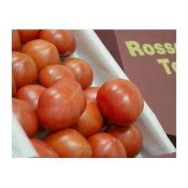 形状不揃い『ロッソトマト』 愛知産 2S~2Lサイズ 1.2kg  ○