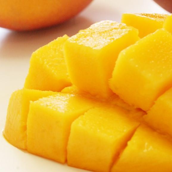 マンゴー 宮崎県産 完熟マンゴー 2Lサイズ 1玉(350~449g) 常温 簡易包装 ※6個まで送料一口01