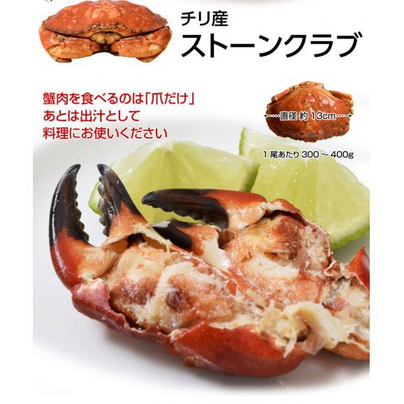 かに カニ 送料無料 ストーンクラブ 3尾入り 冷凍 ○02
