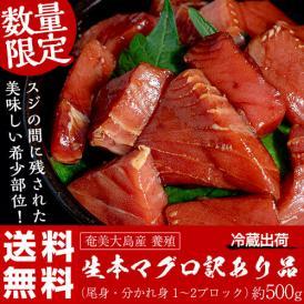クロマグロ 送料無料 奄美大島産 養殖 生本マグロ  訳あり 尾身or分れ身 約500g 冷蔵