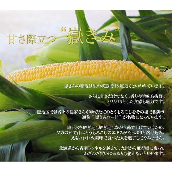 青森県産 『嶽きみ』 M~2Lサイズ 無選別 約3kg(8~13本) ※冷蔵 送料無料03