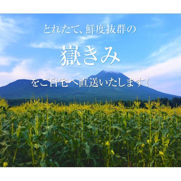 青森県産 『嶽きみ』 M~2Lサイズ 無選別 約3kg(8~13本) ※冷蔵 送料無料04