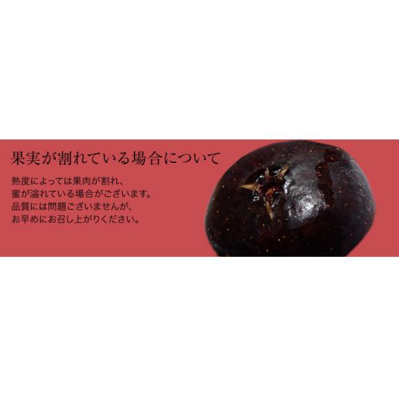 いちじく イチジク 黒いちじく 黒イチジク 佐賀県産 富田秀俊さんの ビオレソリエス 約300g(3~8玉)×2P ※冷蔵・産地直送 送料無料05