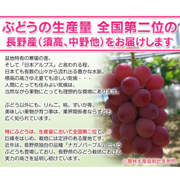 葡萄 ブドウ 長野県産 赤ぶどう クイーンニーナ 2房 合計約800g 送料無料04