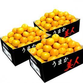 高糖度みかん みかん 佐賀県産 JAからつ うまか美人 約2.5kg×3箱 2S~3Sサイズ 送料無料