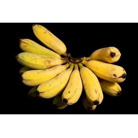 荘司さんが作る 沖縄県産 アップルバナナ 1.5kg(1~2房)