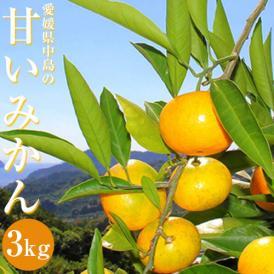 送料無料 農音みかん 約3kg(目安27~33玉) S~Lサイズ 愛媛県 中島町産  ※常温・産地直送