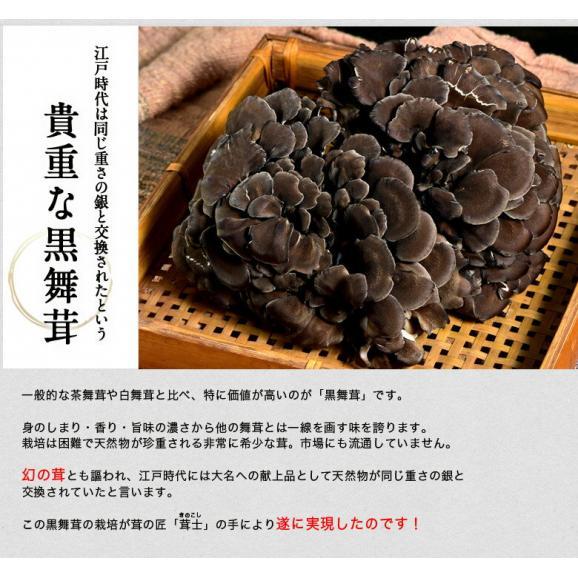 新潟県産 黒舞茸『真』 1株(約700g) 化粧箱 ※冷蔵03