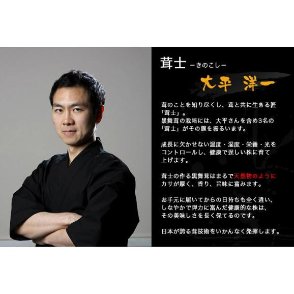 新潟県産 黒舞茸『真』 1株(約700g) 化粧箱 ※冷蔵04