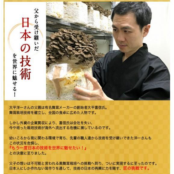 新潟県産 黒舞茸『真』 1株(約700g) 化粧箱 ※冷蔵06