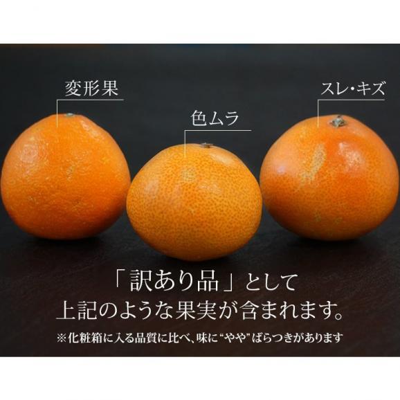 愛媛県産 お試し 紅まどんな バラ詰め 約2kg (目安として8~18玉) M~4Lサイズ ※常温 送料無料02