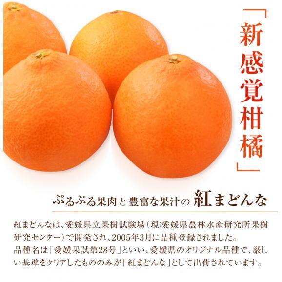 愛媛県産 お試し 紅まどんな バラ詰め 約2kg (目安として8~18玉) M~4Lサイズ ※常温 送料無料04