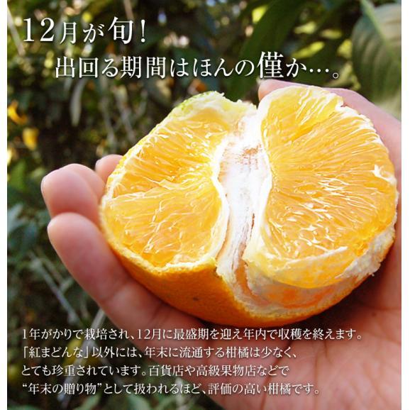 愛媛県産 お試し 紅まどんな バラ詰め 約2kg (目安として8~18玉) M~4Lサイズ ※常温 送料無料05