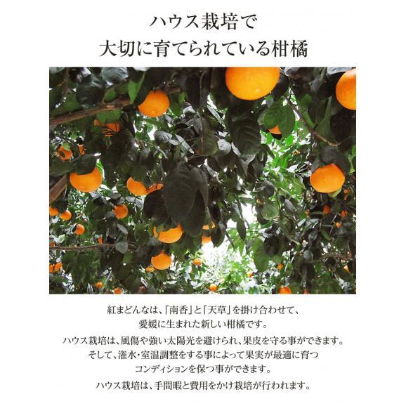 愛媛県産 お試し 紅まどんな バラ詰め 約2kg (目安として8~18玉) M~4Lサイズ ※常温 送料無料06