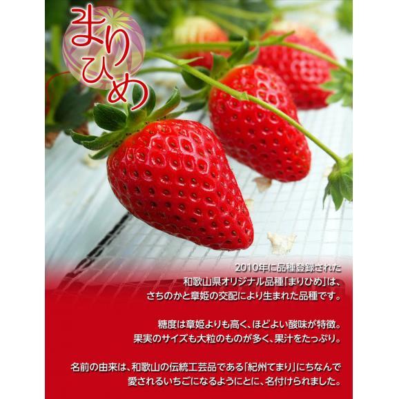 送料無料 いちご 和歌山県産 日高川町の「まりひめ」 約450g 9~15粒入05