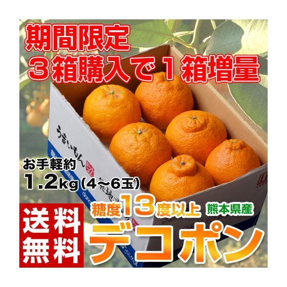 デコポン でこぽん 熊本県産 約1.2kg 4~6玉【3箱買えば1箱オマケ】送料無料 ※常温01