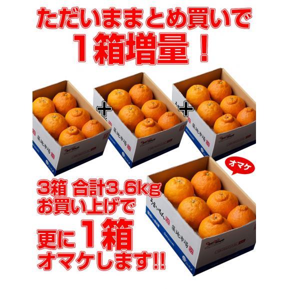 デコポン でこぽん 熊本県産 約1.2kg 4~6玉【3箱買えば1箱オマケ】送料無料 ※常温02