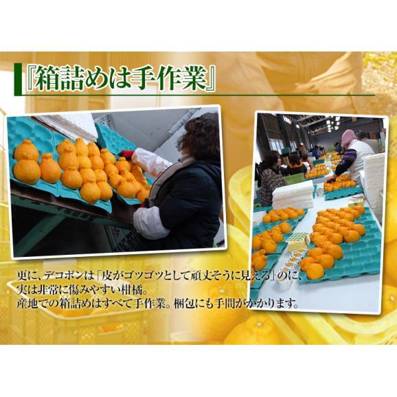 デコポン でこぽん 熊本県産 約1.2kg 4~6玉【3箱買えば1箱オマケ】送料無料 ※常温05