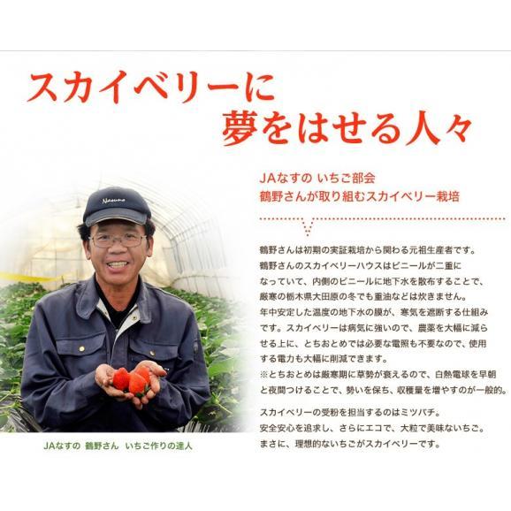 いちご 栃木県産 「スカイベリー」 1箱 DX(デラックス)約450g(8~12粒) ※冷蔵04