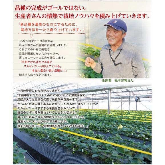 いちご 栃木県産 「スカイベリー」 1箱 DX(デラックス)約450g(8~12粒) ※冷蔵05