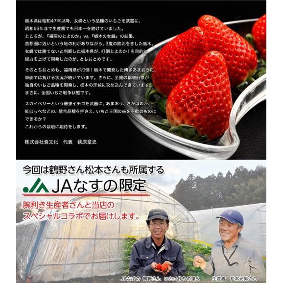 いちご 栃木県産 「スカイベリー」 1箱 DX(デラックス)約450g(8~12粒) ※冷蔵06